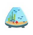 ornamental fishes in aquarium of cone shape water vector image