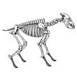 skeleton a hyena vector image