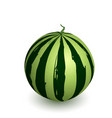 watermelon ripe with shadow vector image vector image