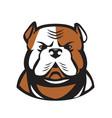 american bulldog head front retro vector image vector image