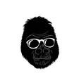 gorilla wear glass vector image