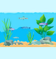 colorful cartoon aquarium fishes set promo poster vector image vector image