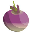 purple and violet turnip root of vegetables on vector image vector image
