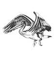 Hand sketch of a flying pelican vector image