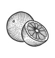 orange citrus sketch engraving vector image vector image