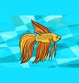 cockerel aquarium fish vector image vector image