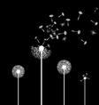 dandelion flowers Stock vector image