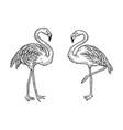 flamingo bird sketch engraving vector image vector image