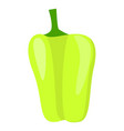green paprika icon flat style vector image