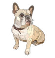 sitting pug vector image