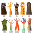 animal paw animalistic pets claw or hand of vector image