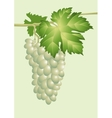 cluster of vine vector image