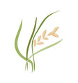ear of ripe rice grains on stem with green leaves vector image