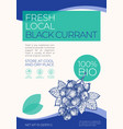 fresh local fruits and berries label template vector image