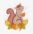 squirrel animal seating autumn leaves