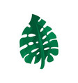 tropical monstera leaf vector image vector image