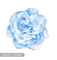 light blue Rose Flower vector image