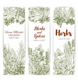 herbs and spices sketch banners vector image vector image
