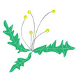 simple image little yellow flowers basic rgb vector image vector image