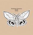 eudocima tyrannus is a moth family vector image vector image