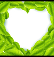 Fresh green leaves with heart shaped frame vector image vector image