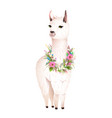 lama animal design with flowers laurel vector image vector image