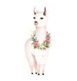 lama animal design with flowers laurel vector image