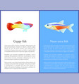 guppy and neon tetra fish isolated on white icons vector image vector image