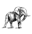 Hand sketch of an elephant vector image vector image