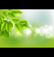 Fresh green leaves with Sunny background vector image vector image
