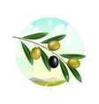Realistic olive branch vector image