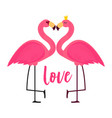 cute pink flamingo in love background vector image