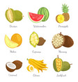 durian ans watermelon icons vector image
