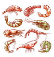 shrimp hand drawn sea and seafood symbol vector image vector image