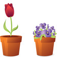 spring flowers in pot vector image