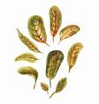watercolor bright leaves of arrowroot vector image vector image
