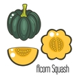 Acorn squash cartoon vector image vector image
