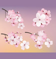 beautiful blossoming dark and light pink sakura vector image