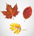 Color Autumn Leaves