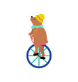 cute bear in hat riding unicycle funny animal vector image