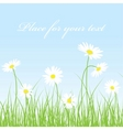 cute chamomile floral background vector image vector image