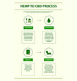hemp to cbd process vertical infographic vector image vector image