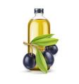 olive oil glass bottle vector image vector image
