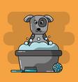 pet grooming dog bucket foam brush ball toy vector image vector image