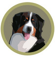 portrait a bernese mountain dog vector image vector image