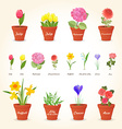 realistic collection of different houseplants in vector image vector image