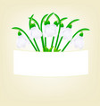 snowdrops on a beige background vector image