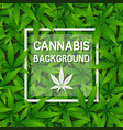 green cannabis herb leaf background with frame vector image vector image