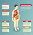 Human organs anatomical poster