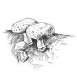 mushroom shiitake growing in wildlife vintage vector image